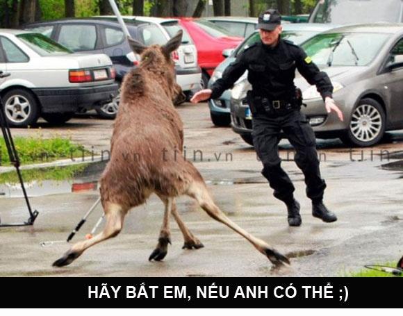 'Hay bat em, neu anh co the' hinh anh