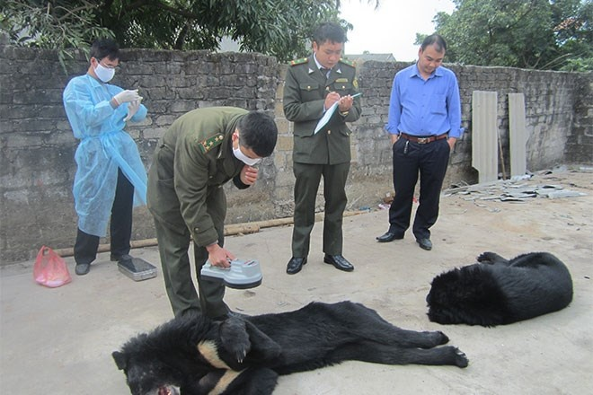 Gau nuoi chet hang loat o Quang Ninh: Cau cuu trong vo vong hinh anh