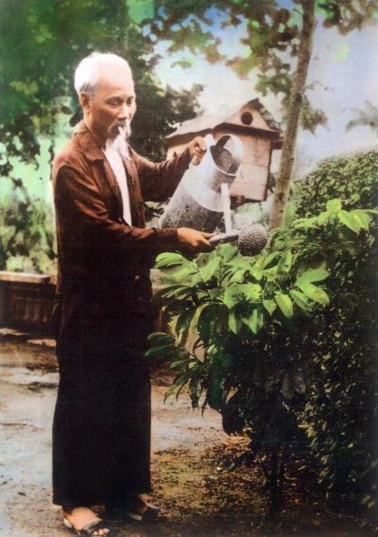Chu tich Ho Chi Minh qua anh quoc te hinh anh 6 Bác Hồ tỉa cây trong khu vườn ở Phủ Chủ tịch vào năm 1967.