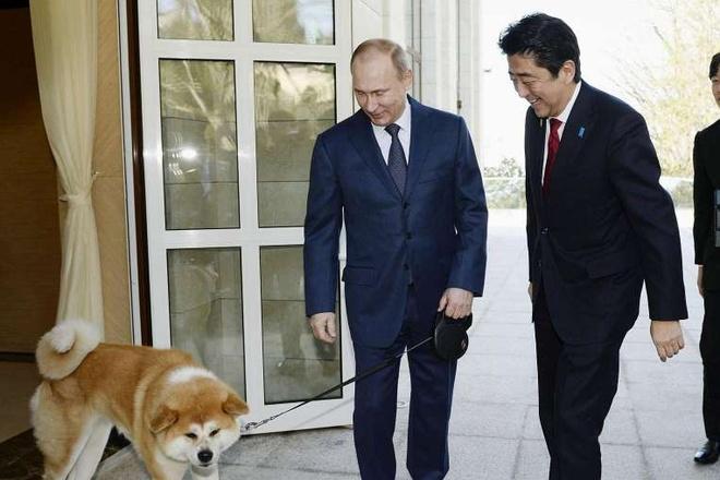Khi ong Putin 'ha guc' Abe tren dat Nhat hinh anh 2