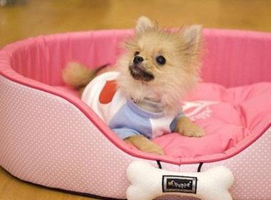 Teen va trao luu nuoi toydog hinh anh