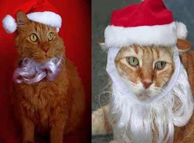 Meo ngo nghinh trong trang phuc Noel hinh anh