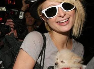 Paris Hilton nhan nuoi cho o Las Vegas hinh anh