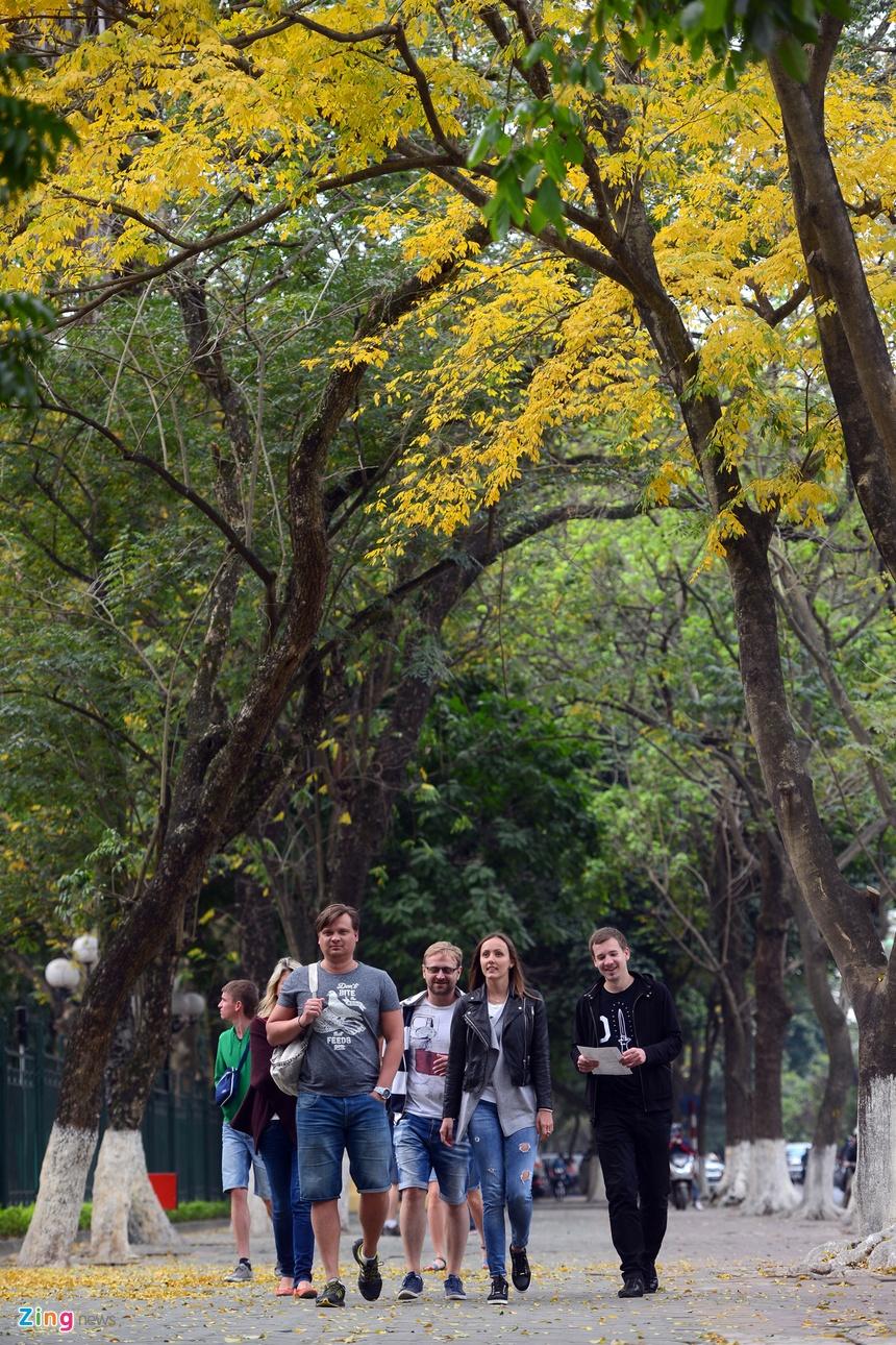 Loc vung thay la vang ruc pho phuong Ha Noi hinh anh 12. Lá cây ...