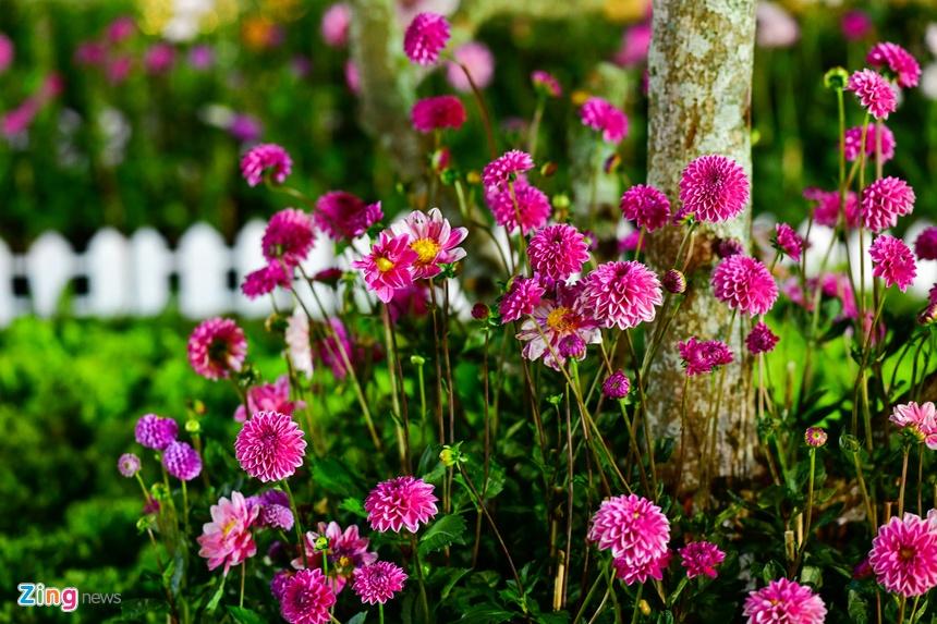 Da Lat ruc ro trong dem khai mac Festival hoa hinh anh 47 hoa_da_lat_zing24.JPG