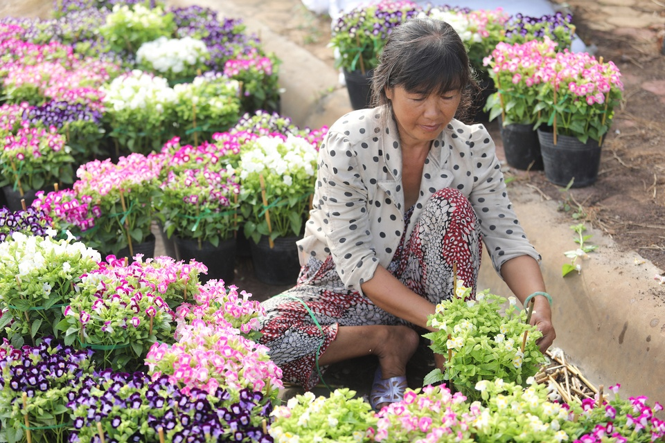 'Vuong quoc hoa' mien Tay nhung ngay giap Tet hinh anh 9