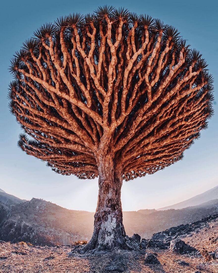 Socotra anh 4