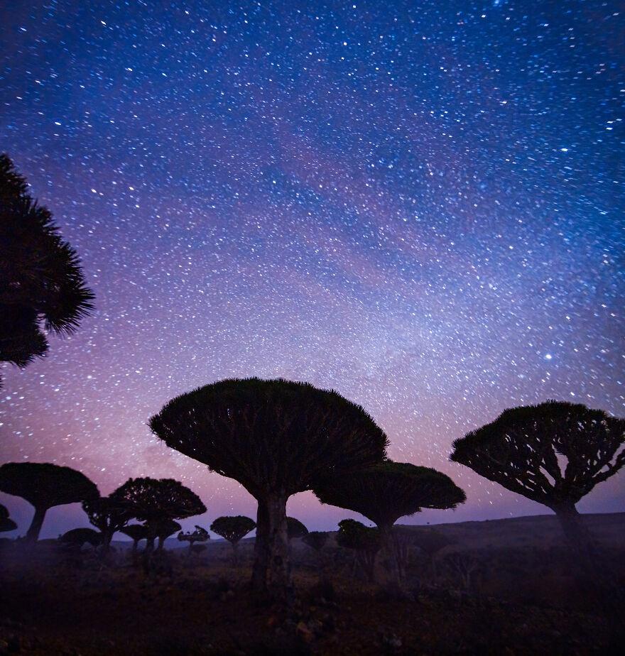Socotra anh 9