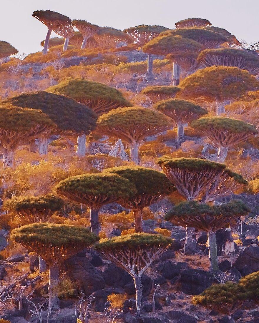 Socotra anh 5