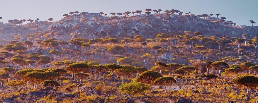 Socotra anh 3