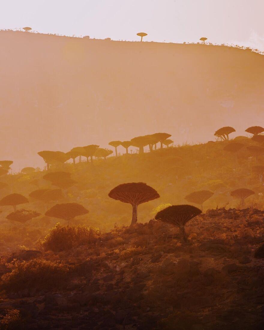 Socotra anh 12