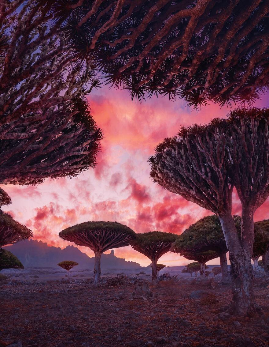 Socotra anh 1