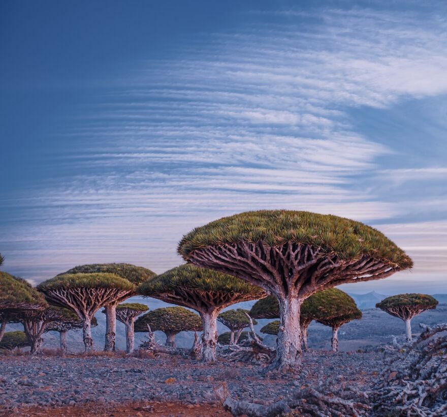 Socotra anh 6